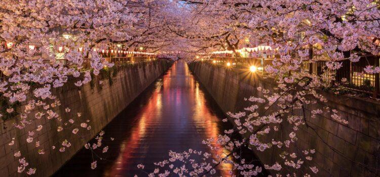 Sakura tunnel, Miyagi