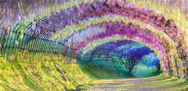 Wisteria Flower Tunnel, Kitakyushu